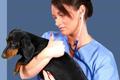 vet Veterinary Secrets