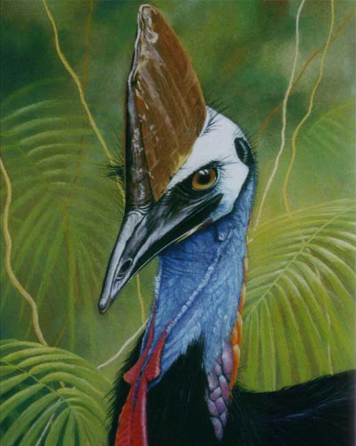 cross1 Cassowary