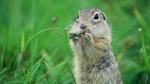 eurosquirrel1 10 Mammals You Never Knew Existed