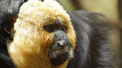 hairysaki1 10 Mammals You Never Knew Existed