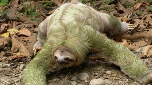 sloth1 Top 10 Worlds Ugliest Creatures