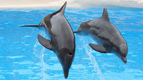 dolphinshark 9 Animals That Saved Human Lives