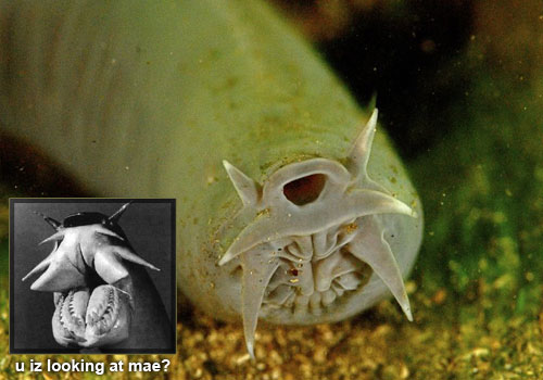 hagfish 22 Sea Creatures That Will Keep You Dry