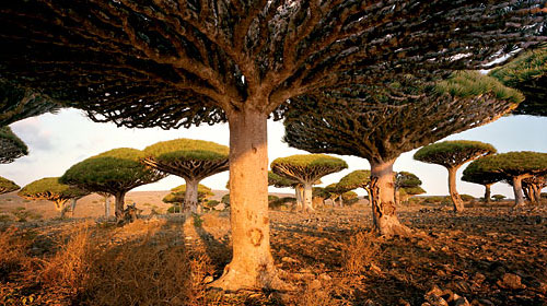 socotra 10 Amazing Places On Earth