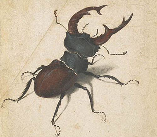 The famous Albrecht Durer's drawing of the Stag Beetle