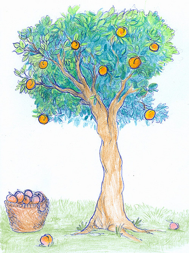peach tree drawing Peach