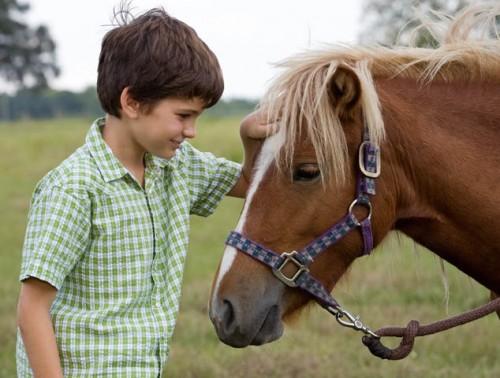Photo Horse Adoption e1287122371377 Banker Horse