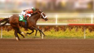 the race Thoroughbred