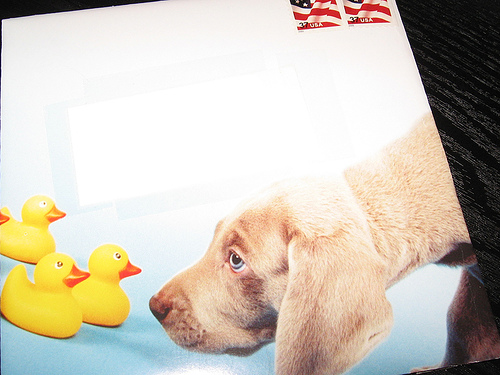 puppy mail Youve Got... Puppy?