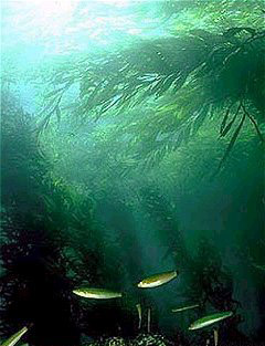 Kelp forest 10 Most Endangered Forests on Earth