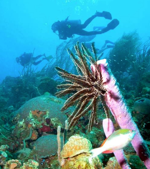 curacao diving Top 10 Locations Any Diver Needs To Visit