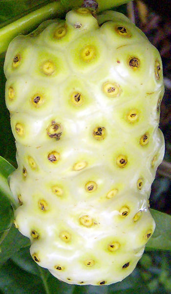 noni fruit 10 of the Most Exotic Tropical Fruits on Earth