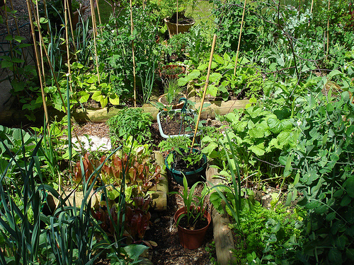 vegetable patch 10 Ways to Conserve the Environment