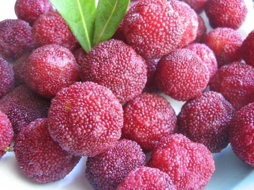 yangmei e1300251658323 10 of the Most Exotic Tropical Fruits on Earth