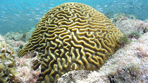 coral1 8 Creatures That Outlive Humans