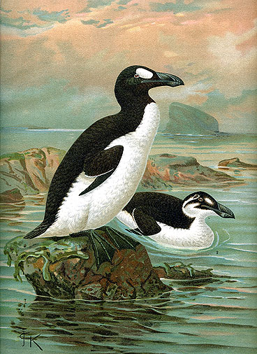 Keulemans GreatAuk Great Auk