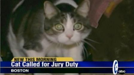 jury duty cat Cat called in for Jury Duty