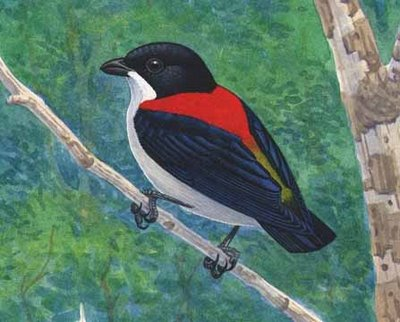 CebuFlowerpecker 10 of the Worlds Rarest Birds