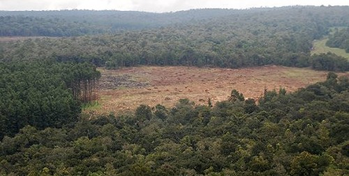 mau forest e1300211938128 10 Most Endangered Forests on Earth